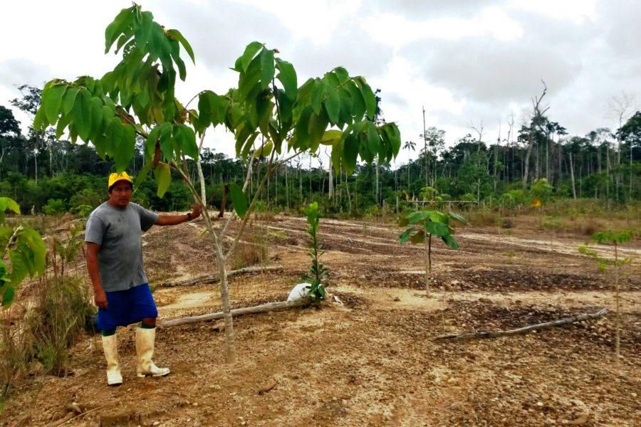 Reforestación en La Pampa, Reserva Nacional de Tambopata. Foto: Román-Dañobeytia et al. 2015.