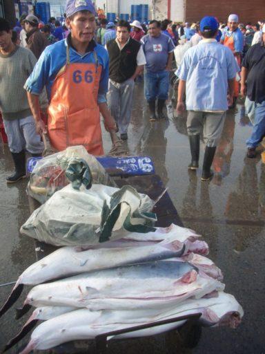 Un trabajador lleva tiburones sin cabeza y eviscerados en Lima. Foto de Oceana