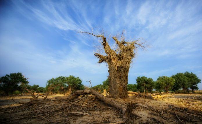 El proceso de paz abre interrogantes como la de saber quién se hará cargo de la preservación y restauración de las áreas afectadas por el conflicto. Fotografía: Conservación Internacional © Heng Wang