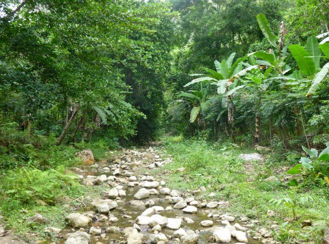 Los bosques secos del Caribe, los Bosques andinos y los páramos son algunos ecosistemas que se encuentran amenazados por el impacto del cambio climático, el cambio de uso del suelo o los conflictos sociales en Colombia. Fotografía: Conservación Internacional © AVSF - Agronomes et Vétérinaires Sans Frontières
