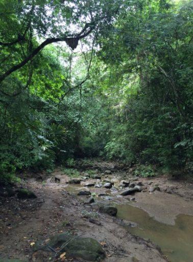 Santuario de Fauna y Flora Los Colorados en la región de los Montes de María, una zona que fue impactada por el conflicto armado en el Departamento de Bolívar, en el Caribe colombiano. Fotografía: Arturo Mora.