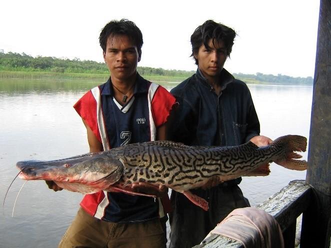 Pescadores indígenas con pescado en manos. Foto: Roxana Salas / Faunagua.