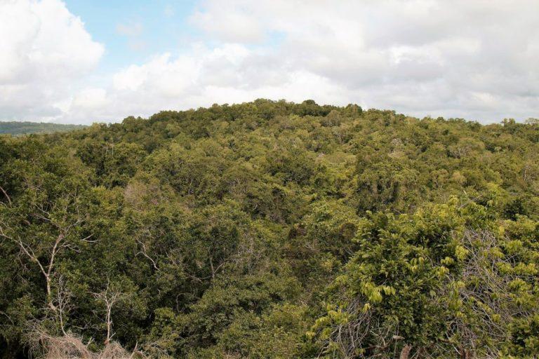 Desde el mirador de Uaxactún, a 40 metros del suelo, se puede apreciar la selva. Se trata de una concesión forestal comunitaria que comprende 83 000 hectáreas. Foto de Joaquín Ruano Cofiño.