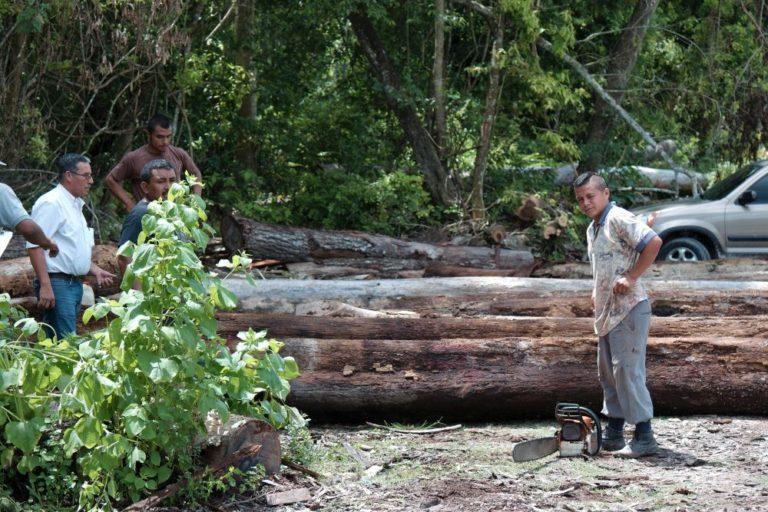 La gestión forestal comunitaria ofrece trabajo directo para 14 000 personas, según datos de la Asociación de Comunidades Forestales. En Uaxactún prácticamente todos los habitantes viven directa o indirectamente de la selva. Foto de Joaquín Ruano Cofiño.