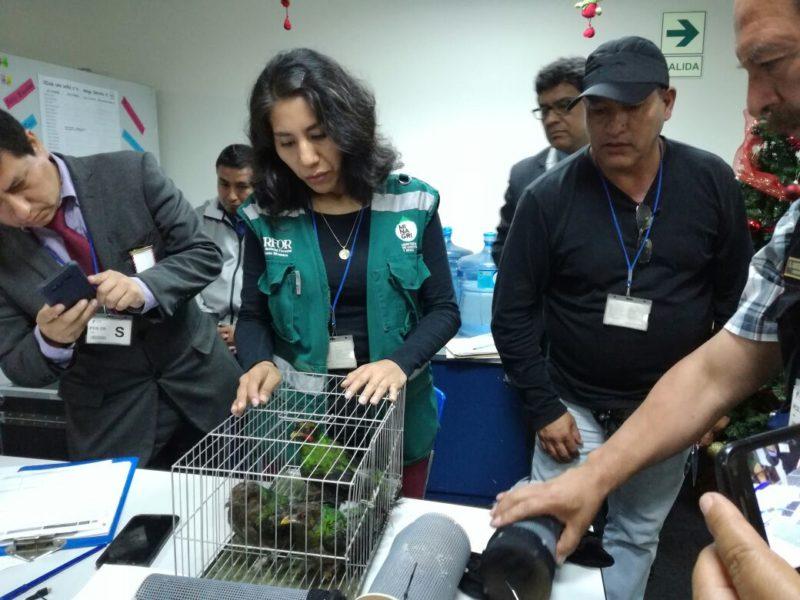 Personal del Serfor y la policía revisan a las especies traficadas. Foto: Serfor.