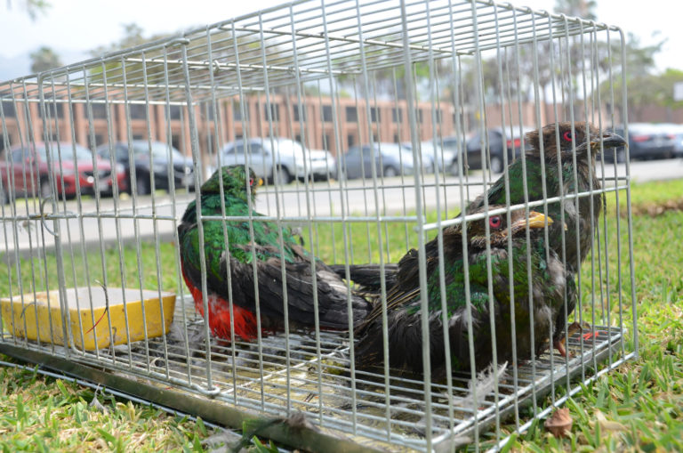 Aves rescatadas. Foto: Serfor.
