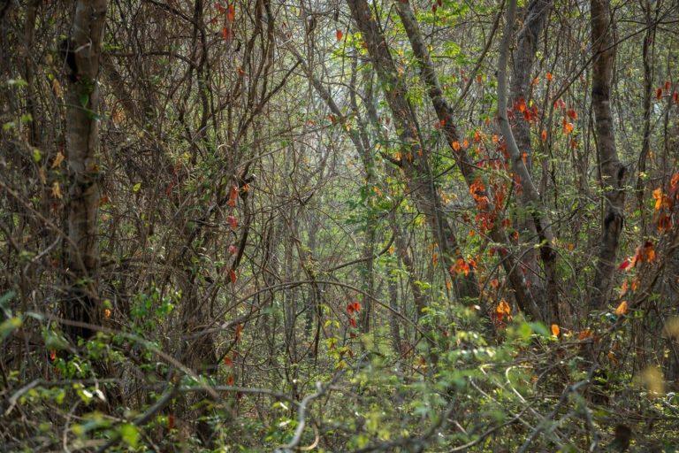El bosque seco tropical se caracteriza por una marcada estacionalidad. Foto de Felipe Villegas, Instituto Humboldt.