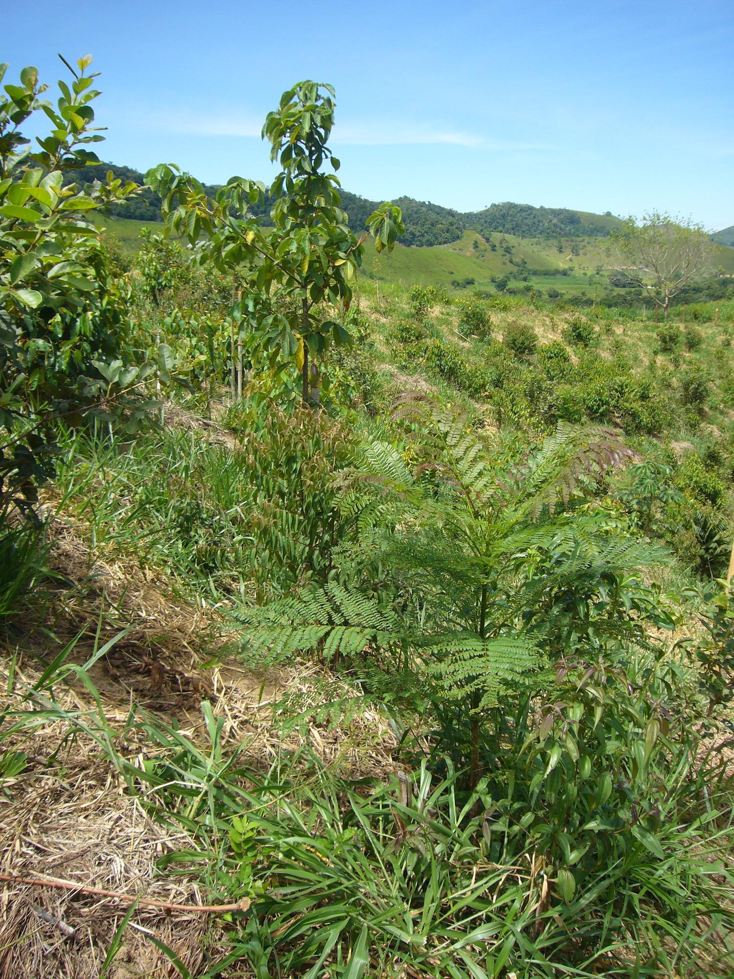 Bosque en proceso de restauración, Maceo, Antioquia. Foto: Zoraida Calle.