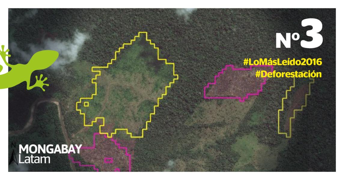 Deforestación en la selva central. Imagen: MAAP.