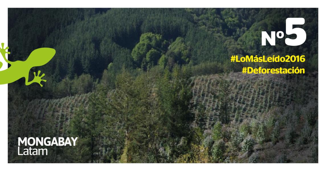 Dos generaciones de plantaciones y un bosque natural de clima templado en el centro de Chile. Foto de Robert Heilmayr.