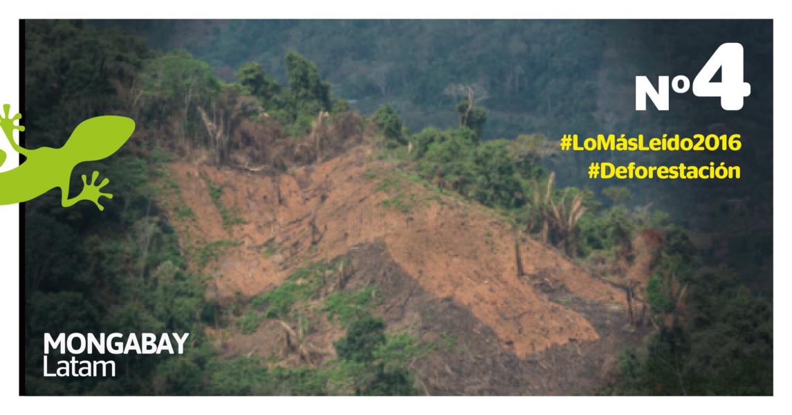 Solo en Puno existen 4.468 hectáreas de cultivos de coca, con un crecimiento anual de 10%. Foto: Musuk Nolte - WCS Perú.