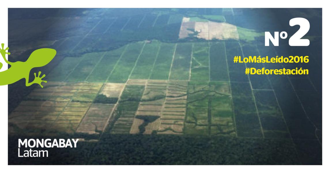 Imágenes aéreas de los parches de deforestación por palma aceitera que empiezan a aparecer alrededor de las grandes plantaciones. Foto: Mongabay Latam.