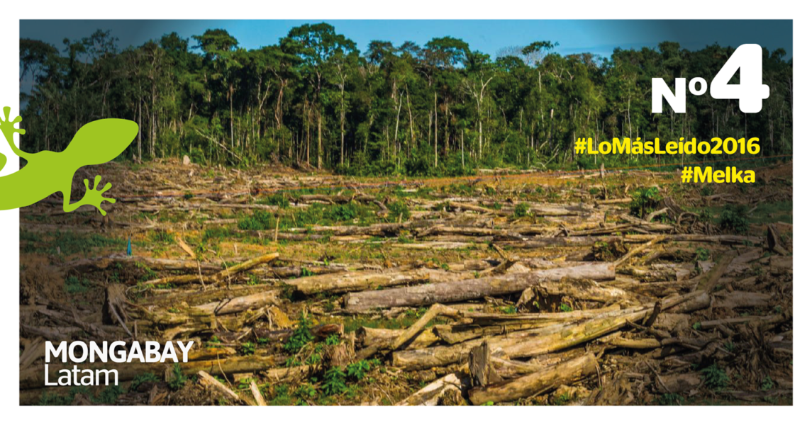 Deforestación. Foto:
