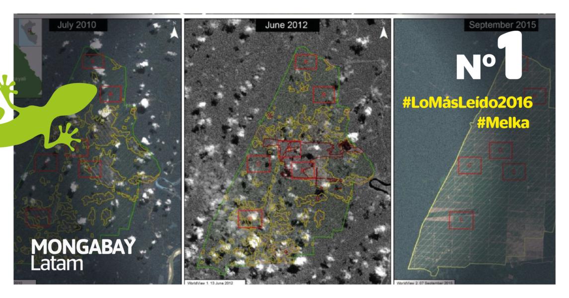 Evolución de la deforestación de Plantaciones de Pucallpa en Ucayali. Imagen: MAAP.