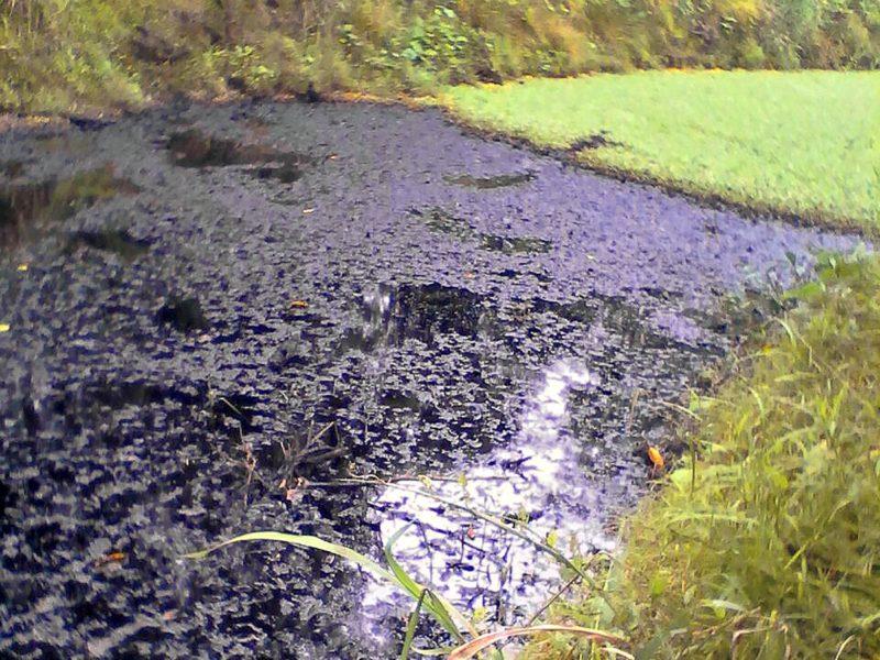 Petróleo derramado en la quebrada Sapuchal. Foto: Pueblos Indígenas Amazónicos Unidos en Defensa de sus Territorios (Puinamudt).
