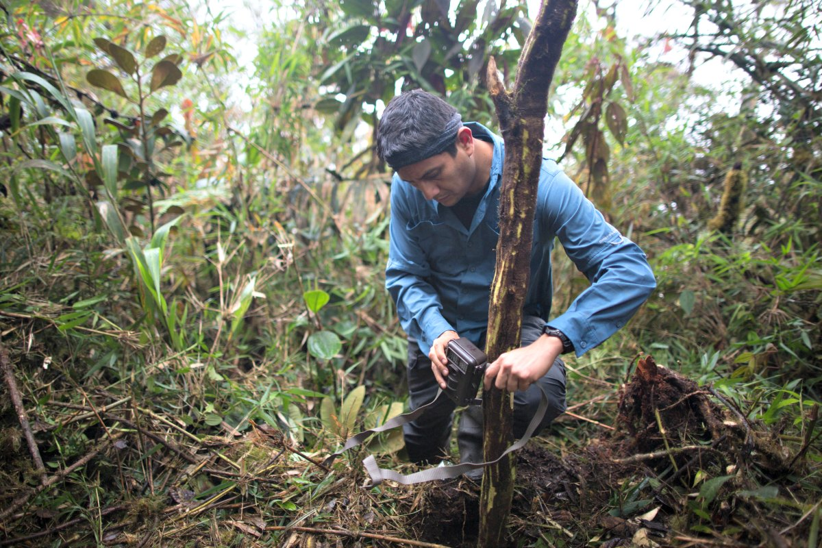 José Luis Mena, director en Ciencias de WWF Perú colocando una cámara trampa en el tallo de un árbol. Foto: WWF Perú.