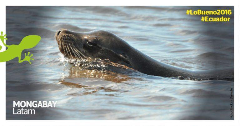 Galápagos / imagen referencial. Foto de Davide en Flickr bajo licencia Creative Commons