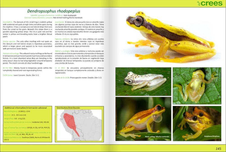 Guía de especies de anfibios de la Reserva de Biósfera del Manu. Imagen: Fundación Creed.