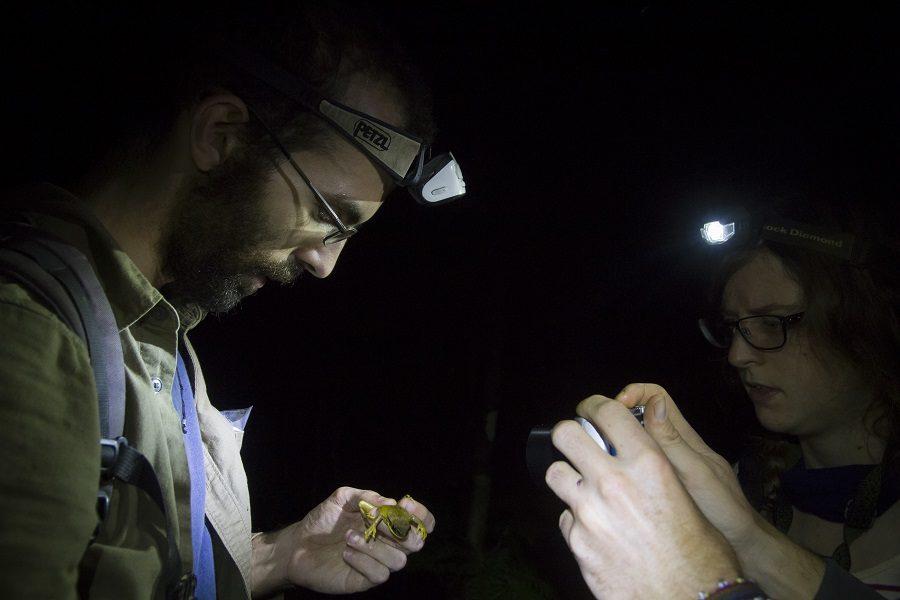 El investigador principal, Jaime Villacampa trabaja en el campo con la identificación anfibios en el Manu Learning Centre. Foto: Crees Foundation / Katie Lin.