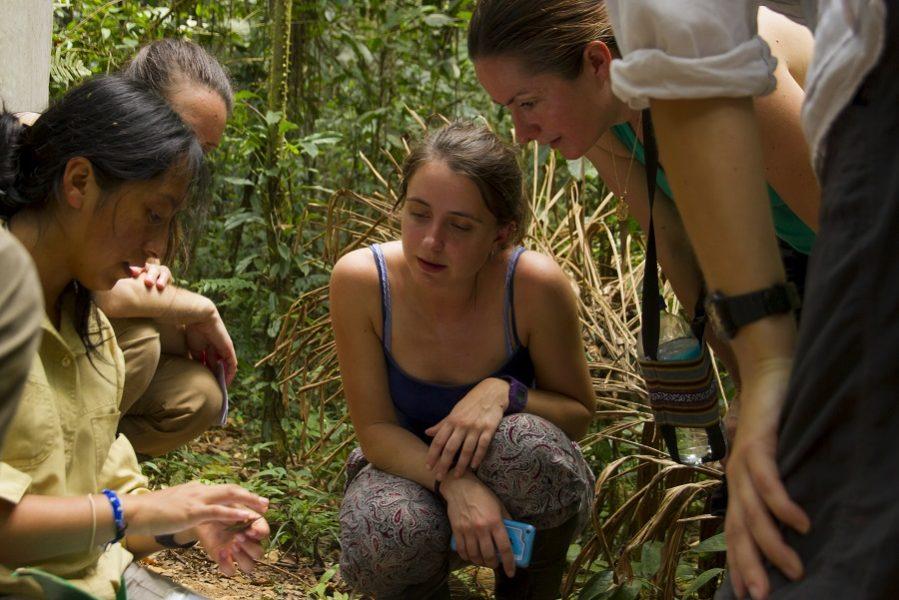 La investigadora Jennifer Serrano Rojas enseña a voluntarios cómo identificar anfibios en el Manu Learning Centre. Foto: Crees Foundation / Katie Lin.