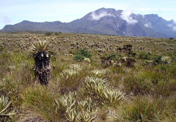 Parque Nacional Natural Chingaza. Foto: