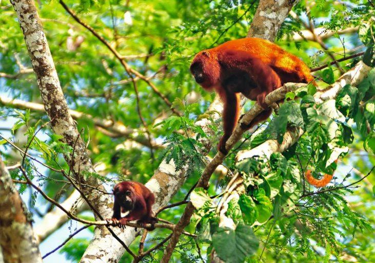 El Parque Nacional Alto Purús es un paraíso de la biodiversidad. Foto de Michell León, Apeco, WWF Perú