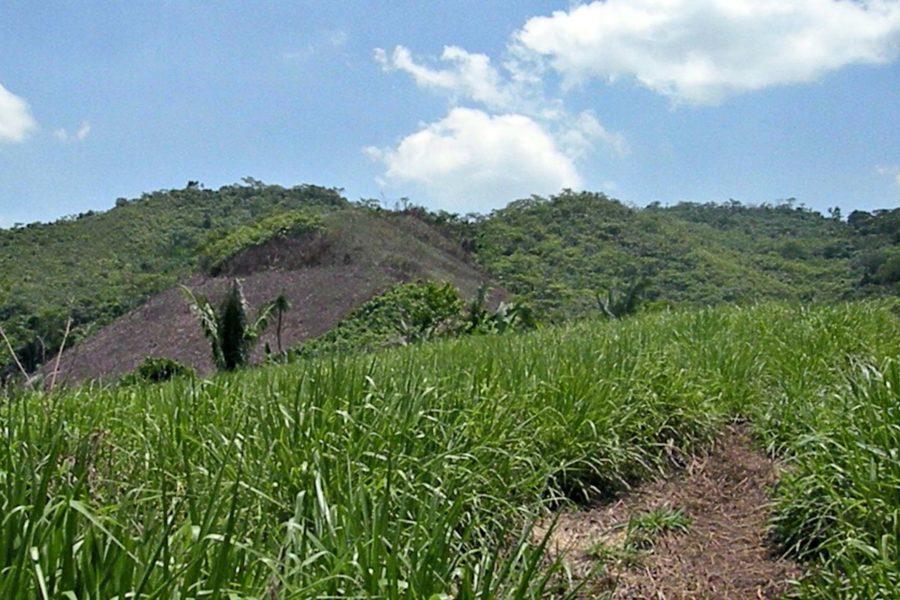 Deforestación alrededor de la ACP Pucunucho. Foto: Neotropical Primate Conservation.