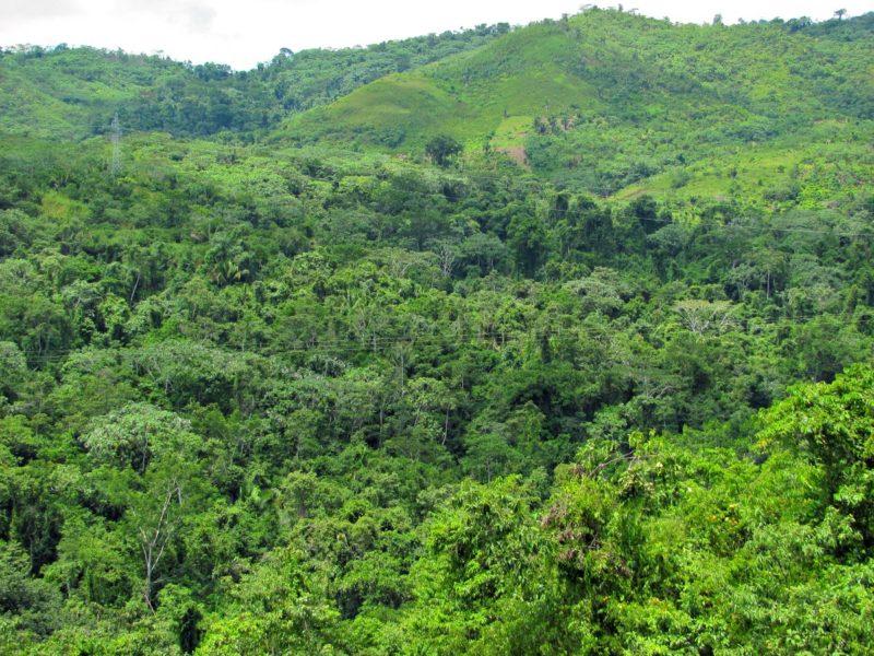 ACP Pucunucho. Foto: Neotropical Primate Conservation.
