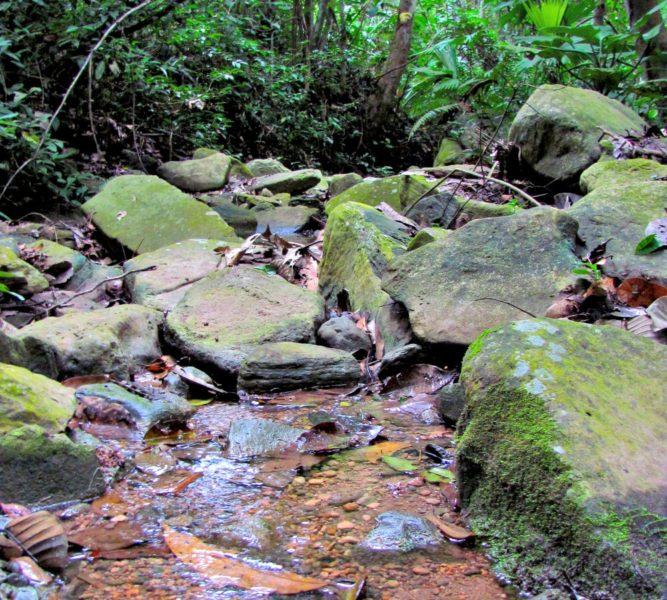 Quebrada Pucunucho. Foto: Neotropical Primate Conservation.