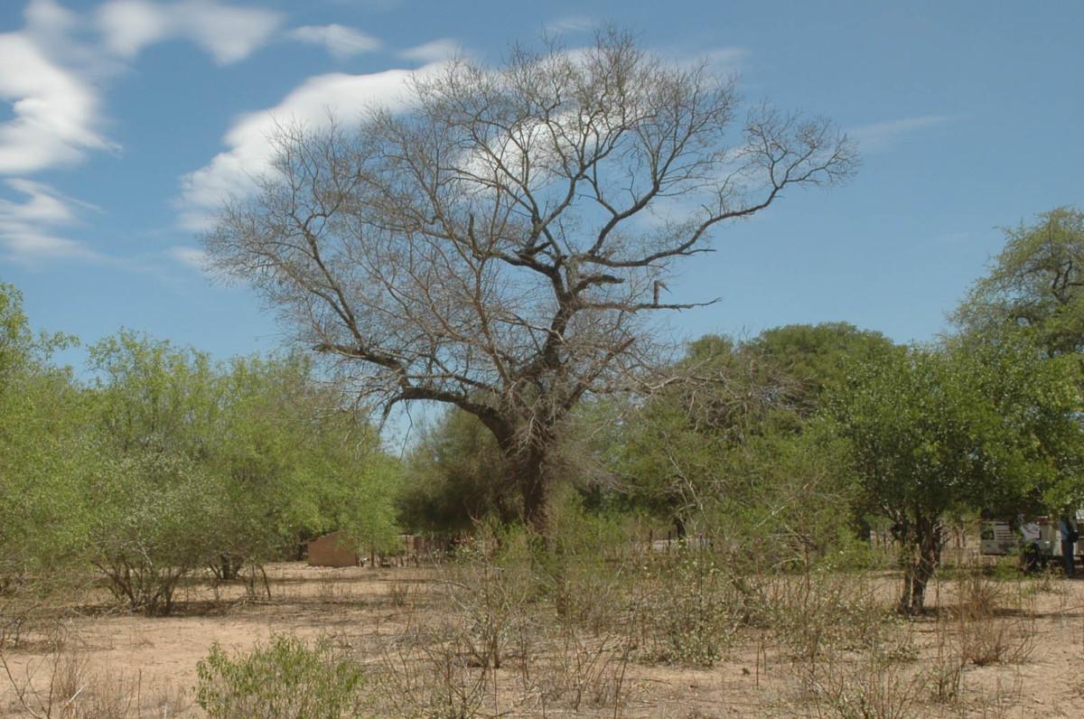 El Chaco - Argentina