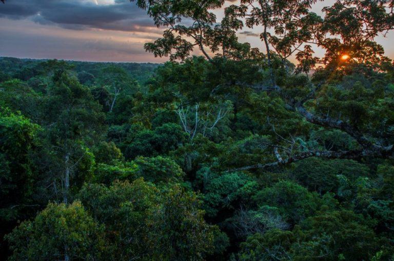 Bosque del Parque Nacional Yasuní. Este lugar megadiverso en fauna y flora está ubicado en Pastaza y Orellana. Foto de José Schreckinger