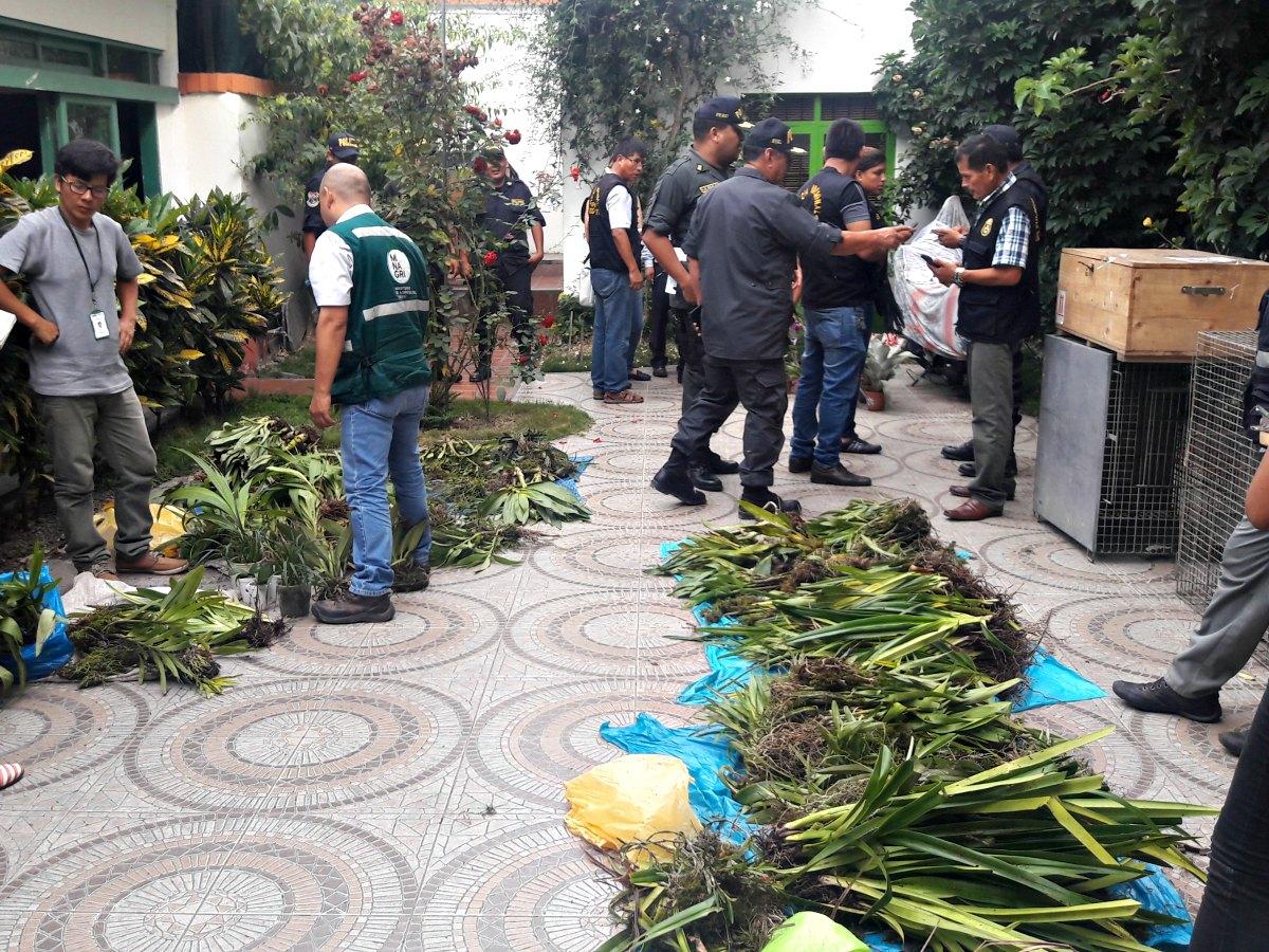 Imagen de operativo de decomiso de orquídeas del 2017. Foto: Serfor.