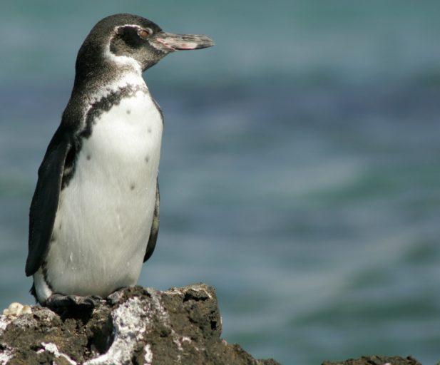 El cierre de las áreas naturales protegidas es una oportunidad para estudiar los cambios en la biodiversidad. Foto: Fundación Charles Darwin.