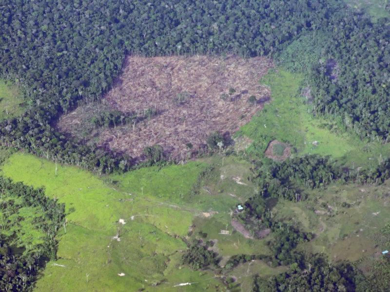 Los bosques que antes estaban ocupados por las FARC están siendo deforestados tras la firma del acuerdo de paz. Foto: Fuerza Aérea.