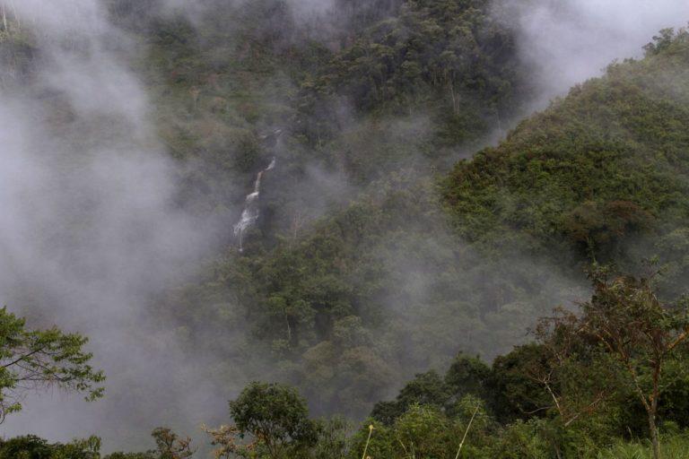 El mono choro de cola amarilla habita en los bosques nublados del nororiente peruano. Foto: Conservamos por Naturaleza.