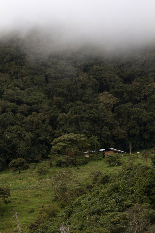 La casa de la familia Rimarachín, en las alturas de Bagua grande, donde crearon su ACP Bosque Berlín, para promover la conservación de los bosques donde vive el mono choro de cola amarilla. Foto de Conservamos por Naturaleza