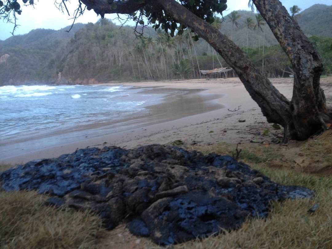 En Chaguaramas de Loero los pescadores apilaron lo que llegó a la orilla pero no sacaron crudo del agua. Foto: Aruska Hernández.