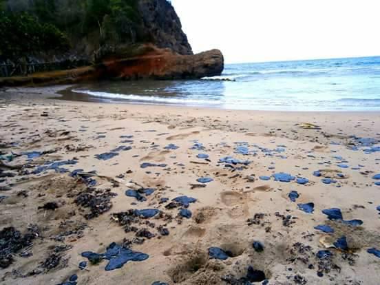 Las comunidades decidieron hacer recolección artesanal en la playa de Chaguarama de Loero. Foto: Oscar Lugo.