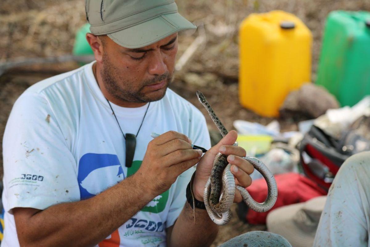 El doctor Luis Ortiz-Catedral de la Universidad de Massey, en Nueva Zelanda, y líder del proyecto. Foto cortesía de la Dirección del Parque Nacional Galápagos