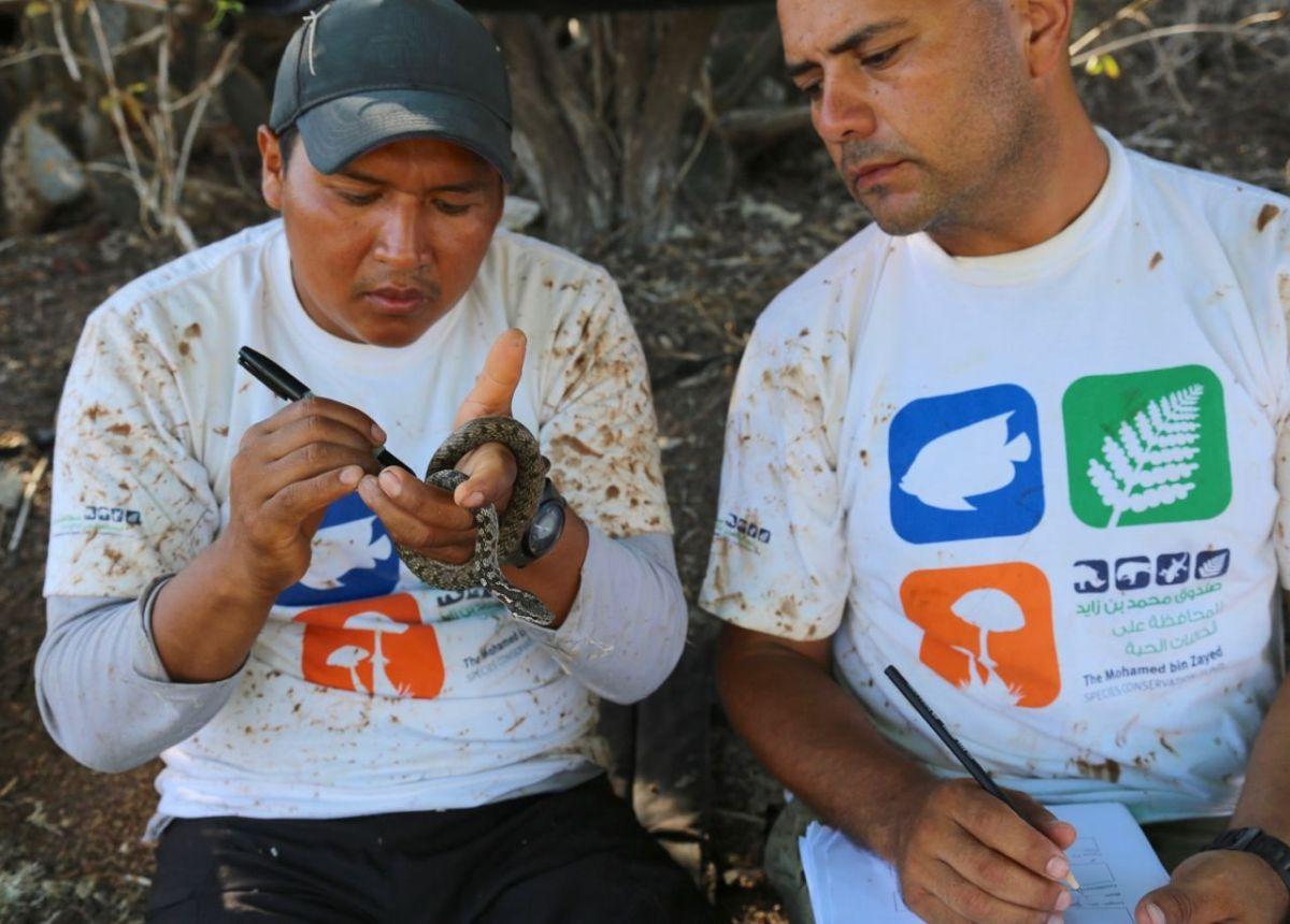 Los investigadores Christian Pilamunga y Luis Ortiz-Catedral examinando un espécimen de Pseudalsophis biserialis biserialis en campo. Foto cortesía de la Dirección del Parque Nacional Galápagos