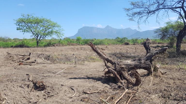 La deforestación amenaza los bosques secos de la zona reservada de Chaparrí. Foto: Serfor.