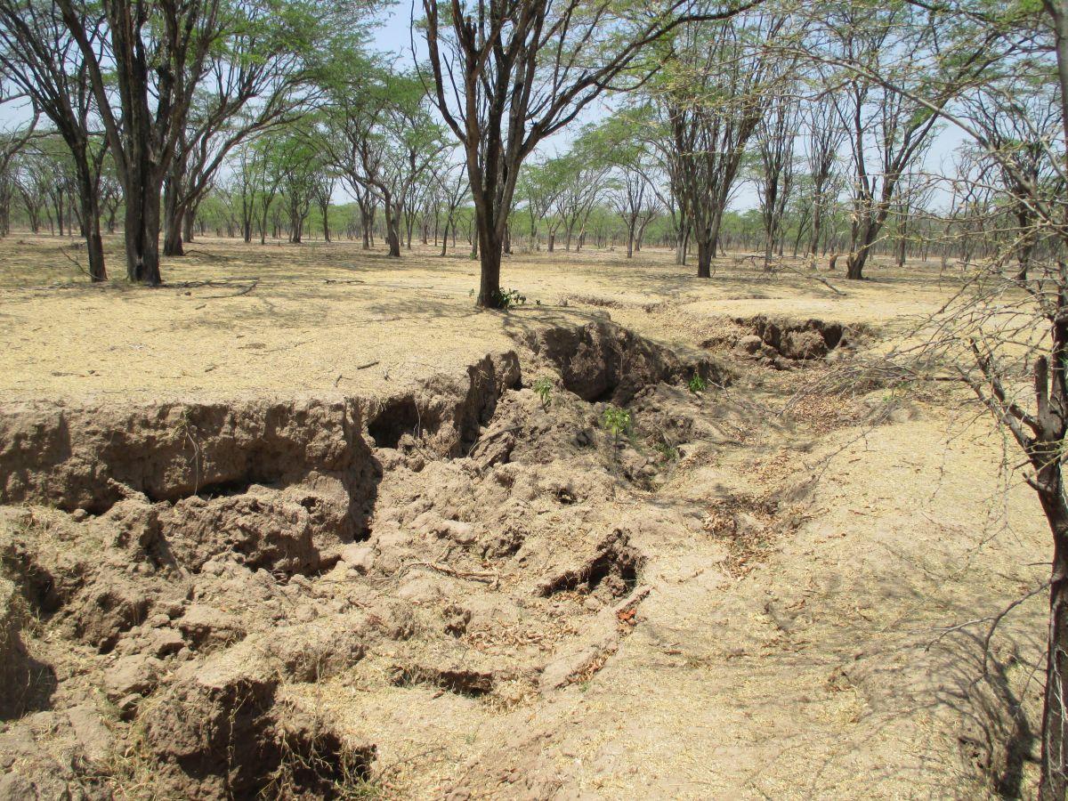Colombia el panorama en cesar y caquet debido a erosi n for Como esta constituido el suelo