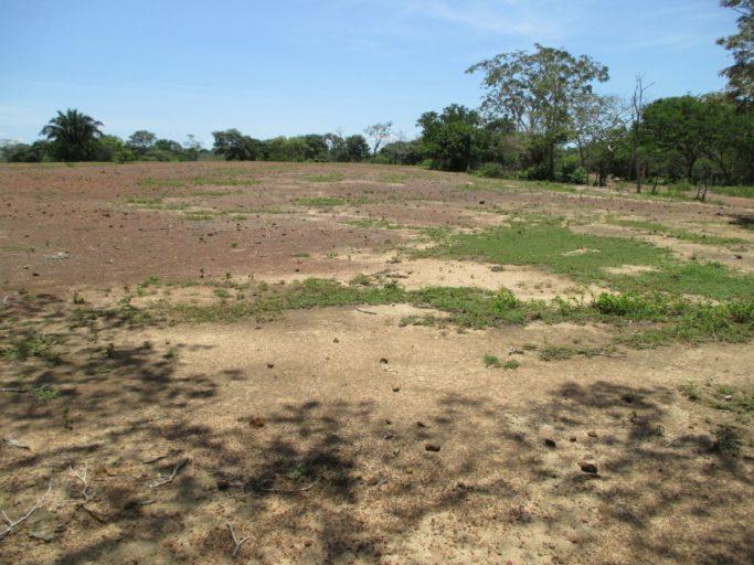 Colombia el panorama en cesar y caquet debido a la for 4 usos del suelo en colombia