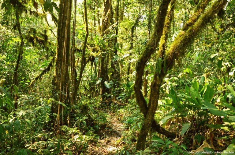 América del Sur Archives - Página 5 de 29 - Noticias ambientales