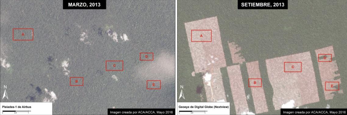 Peru sentencia Dennis Melka Las imágenes muestran el bosque antes de la llegada de la empresa Cacao del Perú Norte y su deforestación posterios. Fuente: MAAP/NASA/USGS.