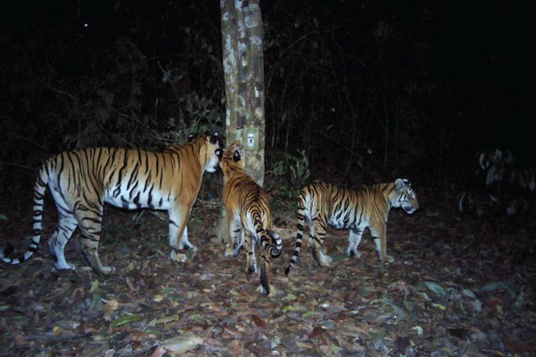 Una madre con sus dos hijos inspecciona una de las 156 trampas de cámara colocadas por el Departamento de Parques Nacionales de Tailandia (DNP), Freeland y Panthera. Foto: DNP/Freeland/Panthera.