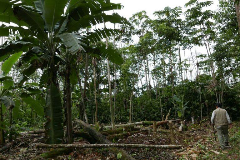 La deforestación afecta concesiones forestales de Madre de Dios, cuyos propietarios deben lidiar con la tala ilegal Foto: Jack Lo Lau