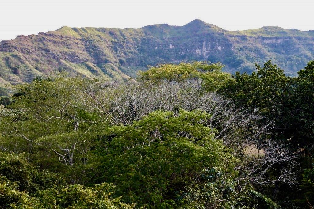 Solo Queda El 8 Cual Es El Futuro Del Bosque Seco Tropical De Colombia