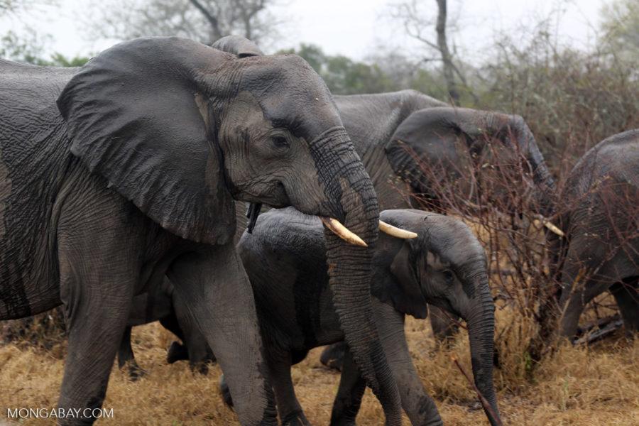 Día Internacional del Elefante: siete fotos que te recordarán por ...