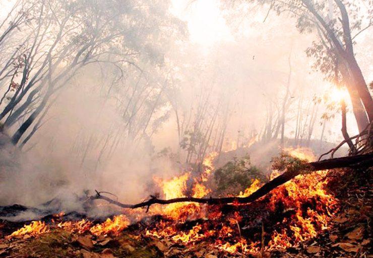 Existe preocupación por los incendios que puedan surgir al usar el método de la quema controlada. Foto: FAN Bolivia.